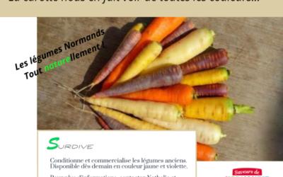 La carotte nous en fait voir de toutes les couleurs…
